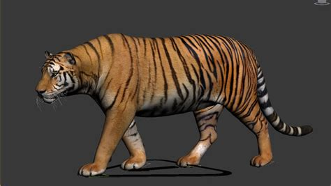 Tiger 3D Model animated rigged .max   CGTrader.com