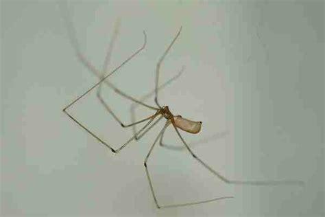 ragni di casa release tipi di ragni ragni innocui ragni pericolosi