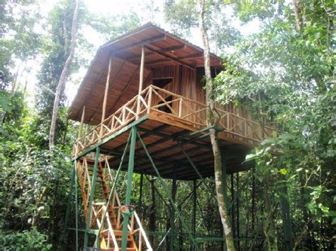monkey house our treehouse monkey house picture of tree houses hotel costa rica la fortuna de