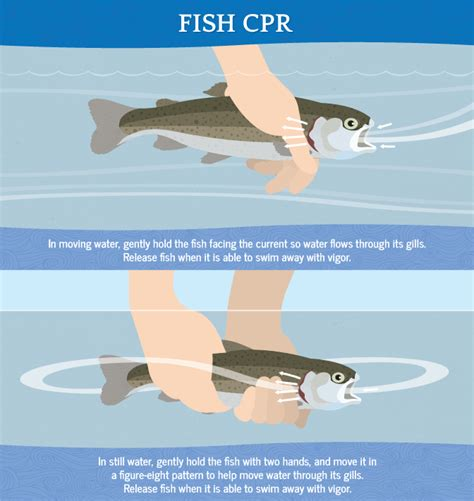 where when and how to catch fish on the east coast of florida classic reprint books guide to catch and release fishing fix