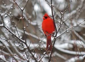 cardinals cynthia reyes author