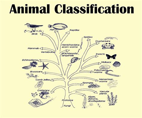 definition of animal biology animal kingdom biology classification species byju s
