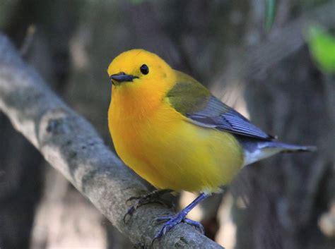laura s birding blog great wisconsin birdathon