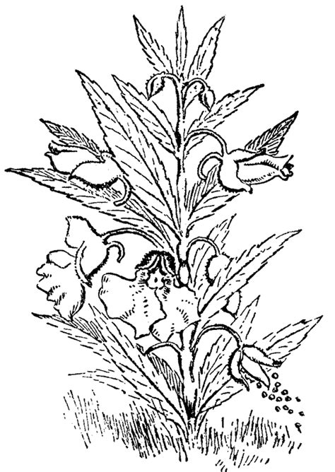 dibujos infantiles con animales flores y plantas en dibujos para imprimir y colorear plantas para colorear