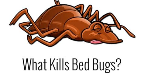 what kills bed bugs on contact bed bug treatment site helping you detect prevent and