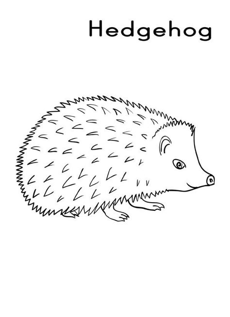 hedgehog coloring pages hedgehog outline template sketch coloring page