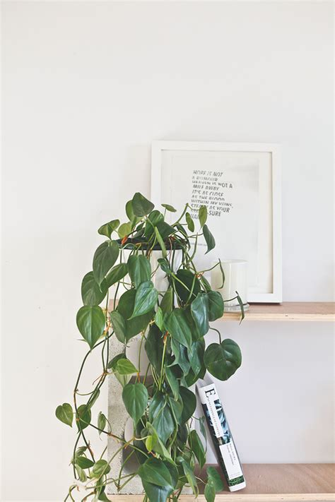 good indoor plants round up 8 great indoor plants that you totally won t kill 187 curbly diy design decor