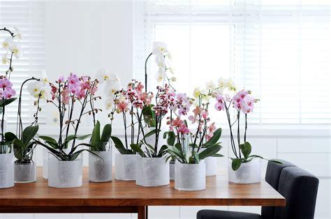 floreros para oficina 191 quieres ser m 225 s productivo compra plantas para tu