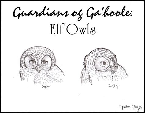 elf owl coloring page how to draw elf owl