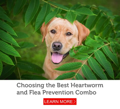 heartworm and flea prevention for dogs a guide to all in one flea and heartworm prevention petmeds 174 pet health