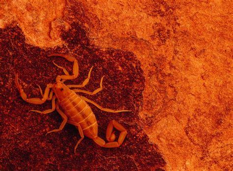 best wallpapers scorpions wallpapers