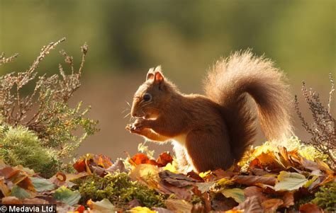 animal seasons squirrels autumn autumn point of no 23