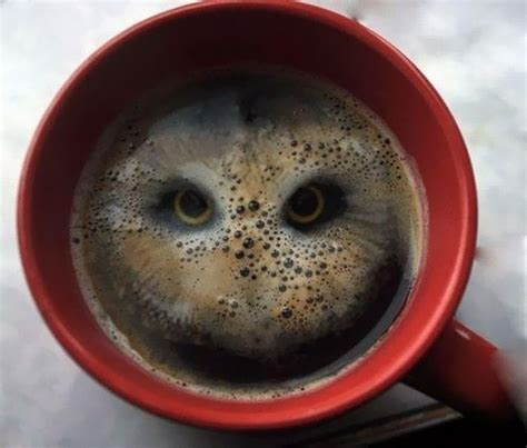 owl coffee new year artist sees a bird after dropping two hula hoops into