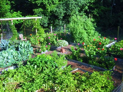 kitchen garden in july