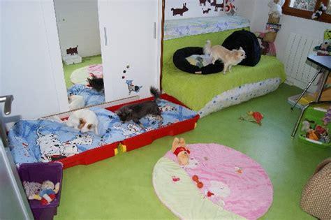 chambre pour chien chambre pour chien design d int 233 rieur et inspiration de