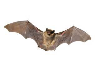 go batty bugs birds and beasts