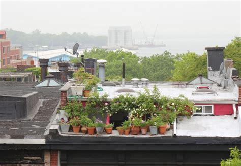 winter balcony garden 10 secrets for growing an balcony garden gardenista