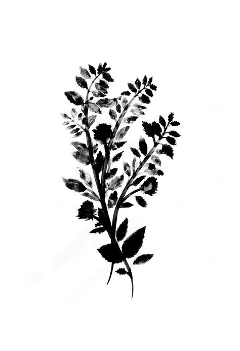 printable images black and white black and white botanical prints pictures to pin on