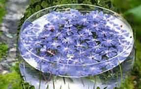 stock bottle fiori di bach rimedi floreali
