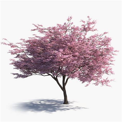 cherry blossom tree 3d model free japanesesakura signature jpg