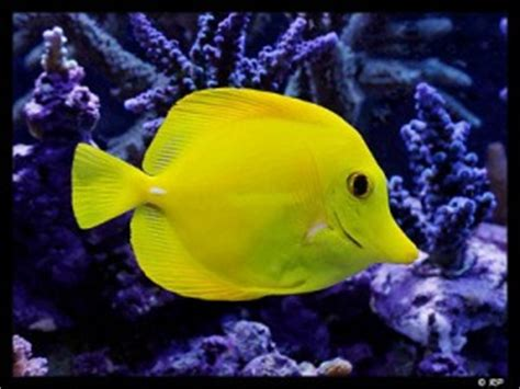 what color are fish exercises vocabulary for learners what