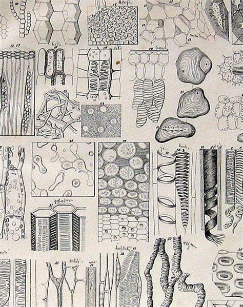 plant cell ideas  pinterest plant cell images