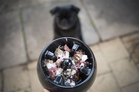 pug diet tips 7 tips to enhance your pug s health wellbeing the pug diary