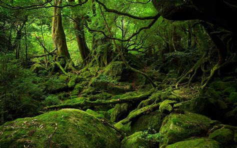 The Of The Forest why the japanese are taking forest baths and why you