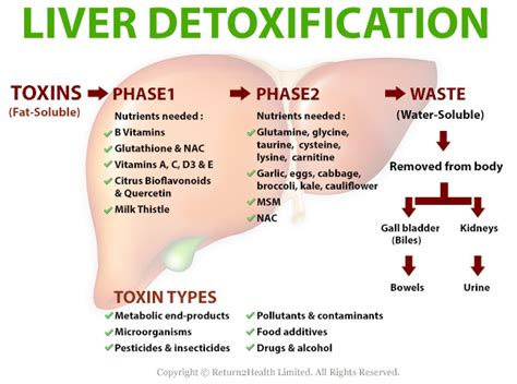 Iron Detox Inliver by How Your Liver Works To Detoxify You Return2health