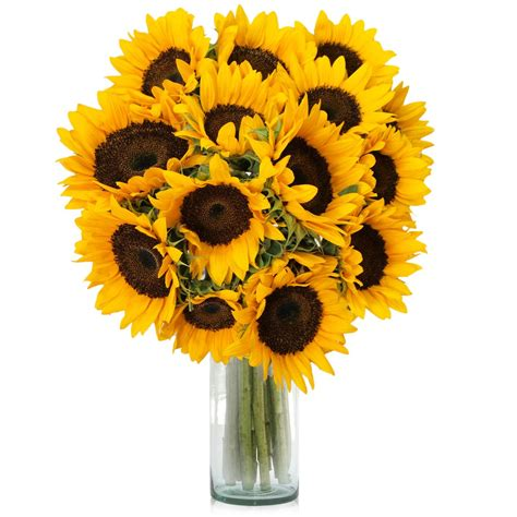 Maravillosa  Muebles Exterior Madera #5: 12-flores-de-girasol-a-domicilio-envio-a-todo-mexico-D_NQ_NP_20933-MLM20201755052_112014-F.jpg