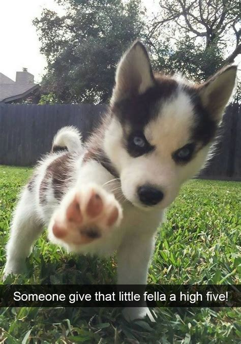 dogs funny snapchats cuties dogs animals puppies