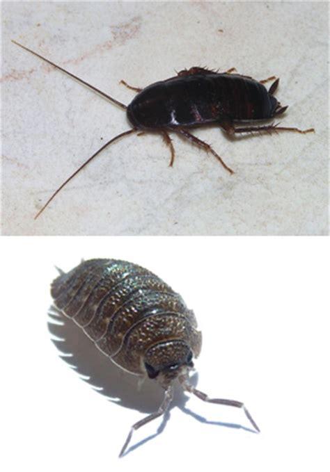Schädlinge Im Bett by Insekten Im Haushalt Silberfischfallen Ungeziefer Im Haus