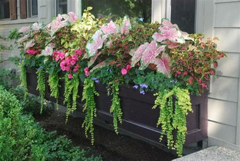large window boxes large window box with shade annuals flower containers