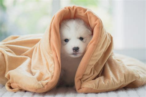 how to keep dogs warm in winter 20 things to keep dogs warm in winter indoors and outdoors