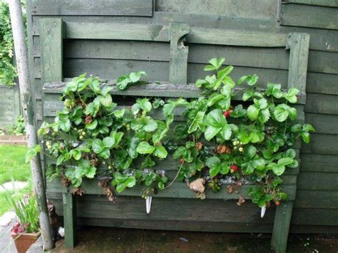 Wooden Strawberry Planter by Strawberry Planter Made From Pallet Garden