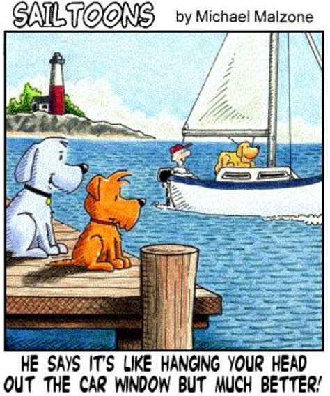 dog on boat quotes funny sailing quotes quotesgram