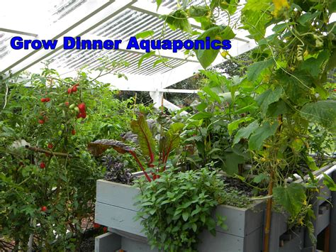 grow bed help with aquaponics