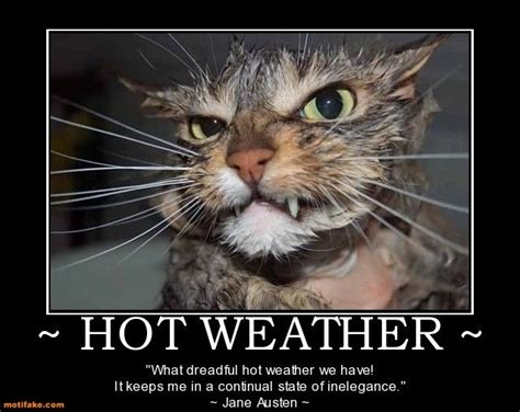 funny hot weather pictures for facebook hot weather weather hot cat sweat summer demotivational