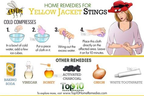 home remedies for yellow jacket stings top 10 home remedies