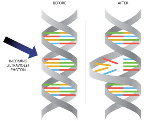 Uv Light Damages Dna By Causing by Solar Radiation Photosynthetically Active Radiation