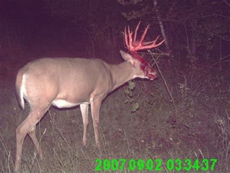 53 best trail cam images on pinterest trail deer