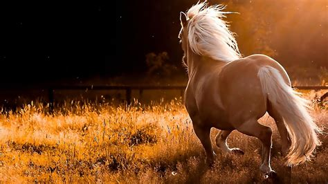 wallpaper hd horse all wallpapers beautiful horse hd wallpapers 2013