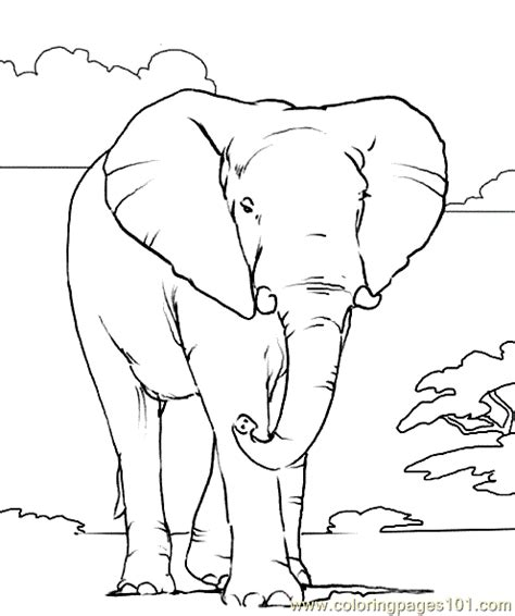 african animals free colouring pages