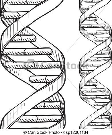 draw helix illustrator dna double helix and pencil drawings on pinterest