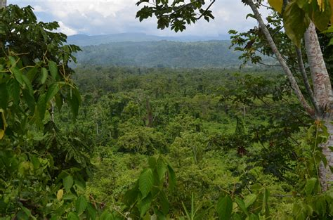 best on amazon why rainforest