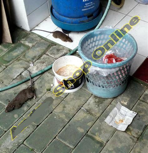 Jual Racun Tikus Di Bekasi jual ramuan racun anti umpan tikus kecoa kecoak semut