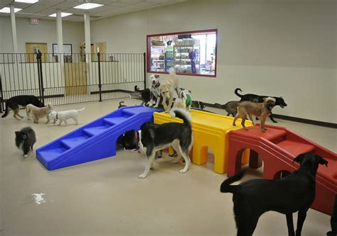 Doggy Daycare, Peoria IL   My Dog's Bakery Daycare & Grooming