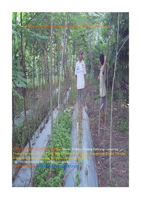 Pakan Walet Nusantara aneka agrebis nanosajalah