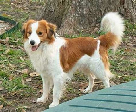 medium breeds breeds large medium size picture websites litle pups