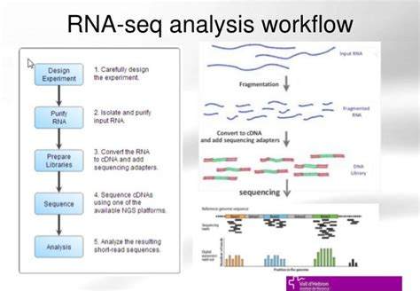 analysis workflow introduction to rna seq and rna seq data analysis ueb uat